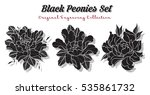 vector black peonies set... | Shutterstock .eps vector #535861732