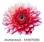Flower Red Motley Dahlia....