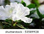 White Blossom Close Up Of...