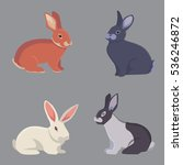 Stock vector vector illustration of cartoon rabbits different breeds fine bunnys for veterinary design 536246872