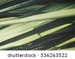 vetiver | Shutterstock . vector #536263522
