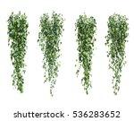 3d rendering of  epipremnum...   Shutterstock . vector #536283652