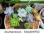 a group of kalanchoe and...   Shutterstock . vector #536304952