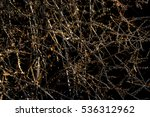 Small photo of Overlapping Branches