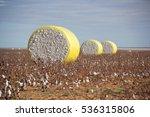Round Cotton Bales In Field...
