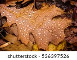 Droplets Of Water On The Autum...