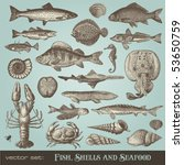 Vector Set  Fish  Shells And...