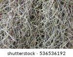Spanish Moss Texture Background