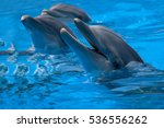 Funny Dolphins In The Pool...