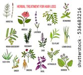 medicinal herbs for hair loss... | Shutterstock .eps vector #536683216