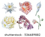 set with flowers. rose. lily.... | Shutterstock . vector #536689882