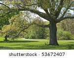 A large old oak tree, part of the beautiful landscape at The Bayard Cutting Arboretum located on Long Island in Great Meadow, NY. - stock photo