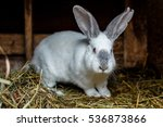 domestic rabbit in a cage  | Shutterstock . vector #536873866