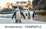 african penguin  on the sandy... | Shutterstock . vector #536896912