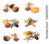 Ocean Seashells Collection...