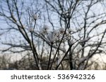 trees and snow in a winter day   Shutterstock . vector #536942326