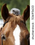 Stock photo one month old grey kitten on the horse 53695633