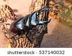 Handmade  The Beautiful Beetle...