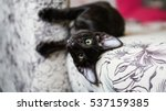 Stock photo black oriental kitten with big green eyes 537159385