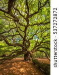 under the angel oak tree in... | Shutterstock . vector #537272872
