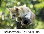 Stock photo cute cat alone cat sad kitten 537301186