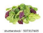 fresh green baby leaves of... | Shutterstock . vector #537317605