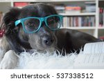 dog reading book with glasses  | Shutterstock . vector #537338512