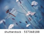 Stock photo beautiful vintage nature scene with dragonfly outdoor on wet morning 537368188