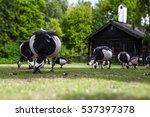 goose in ethnographic park  the ... | Shutterstock . vector #537397378