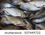 gleaming fresh sweet water...   Shutterstock . vector #537449722