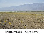 Yellow wildflowers blooming in Death Valley with snow-capped mountains - stock photo