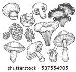 mushroom hand drawn sketch... | Shutterstock . vector #537554905