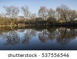 Trees Reflected In Pond In...