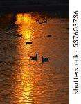 Seagulls  Ducks And Moorhens...