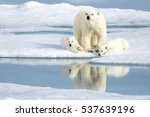 a mother bear keeping an eye as ... | Shutterstock . vector #537639196