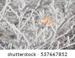 Frozen Branches Covered With A...