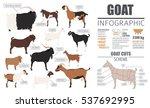 goat breeds infographic...   Shutterstock .eps vector #537692995