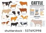 cattle breeding farming...   Shutterstock .eps vector #537692998