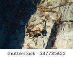capricorn climbs the mountain... | Shutterstock . vector #537735622