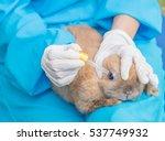 professional veterinarian is ... | Shutterstock . vector #537749932