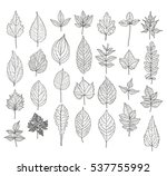 28 hand drawn leaves set. can... | Shutterstock . vector #537755992
