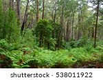 Forest Scenery Along 5km Lilly...