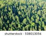 Pine Forest Of The Swiss Jura...