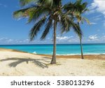 Two Tall Coconut Palm Trees In...