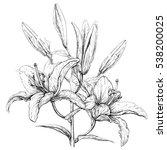 lilly flowers. vector... | Shutterstock .eps vector #538200025