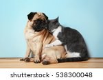 adorable pug and cute cat... | Shutterstock . vector #538300048