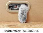 Cute Cat In Cardboard Box