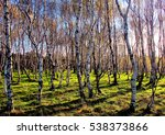 a wood of young silver birch... | Shutterstock . vector #538373866