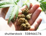 medicinal plant high quality... | Shutterstock . vector #538466176