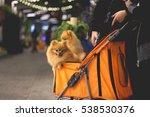 pomeranian dog sit in the... | Shutterstock . vector #538530376